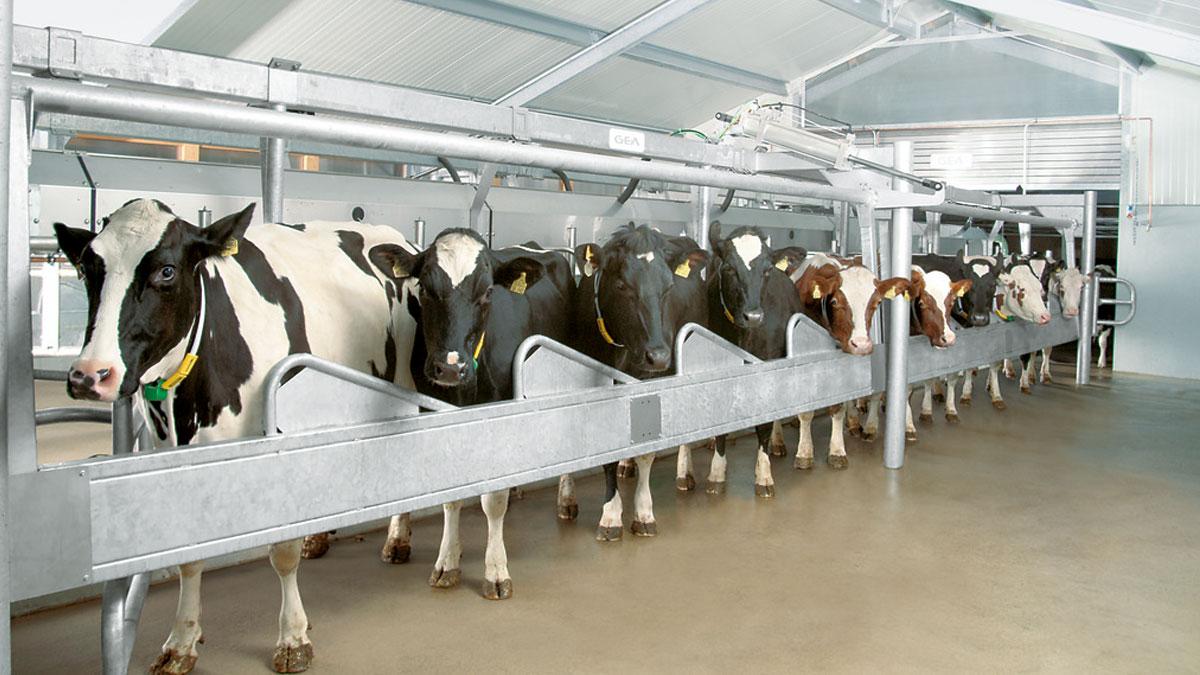 DairyFarming_Global45_1_2_1200x675px.jpg